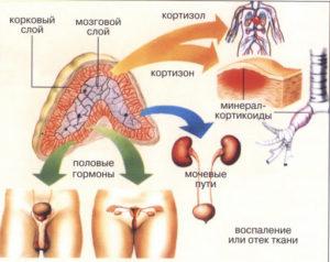 Врожденная дисфункция коры надпочечников