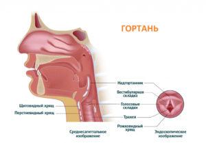 болезни голосового аппарата