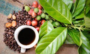 Исторические данные о кофеине, кофеиносодержащих продуктах и табаке